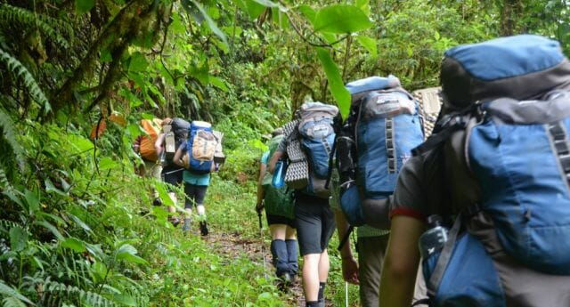 hikers trek into forest