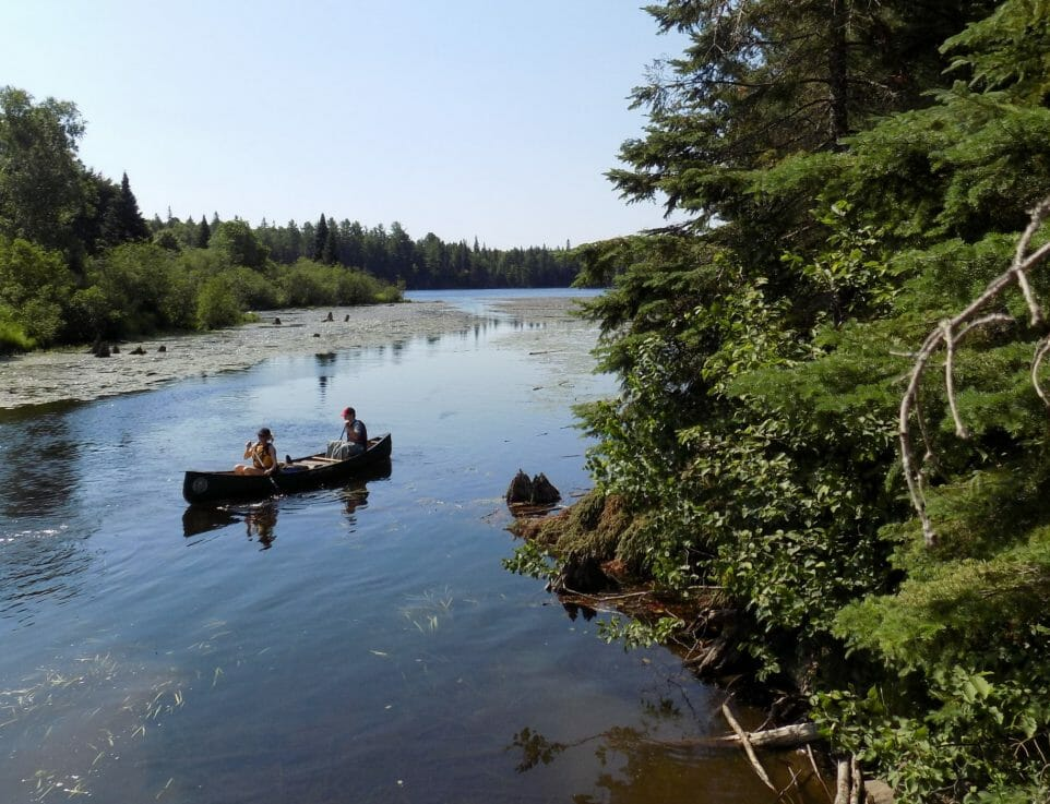 Two people in a canoe with trees on shore