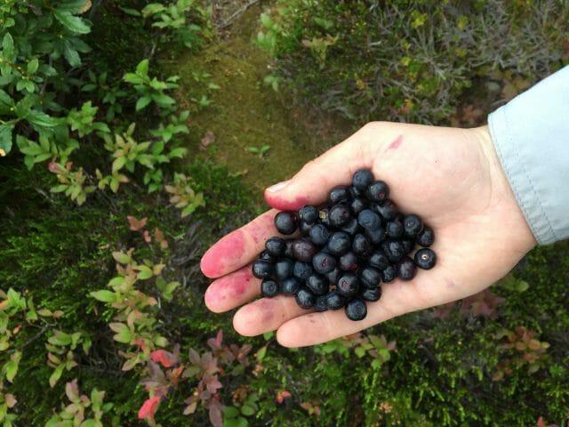 Hand full of blueberries